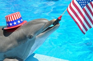 A dolphin named 'Liberty' displays the educational element of captivity. Photo: Nancy Chan