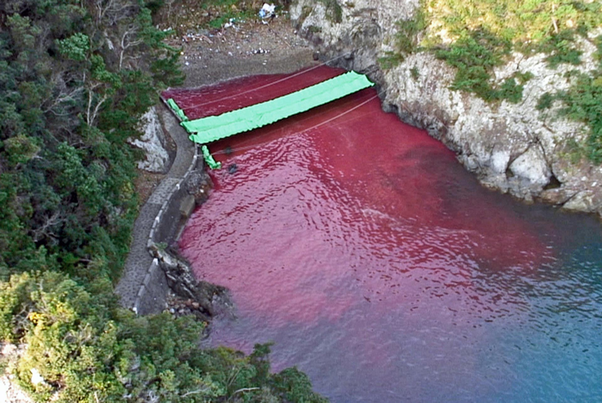 Blood stains the sea at the Cove of Taiji in Japan, after a dolphin slaughter. Photo: Oceanic Preservation Society (OPS)