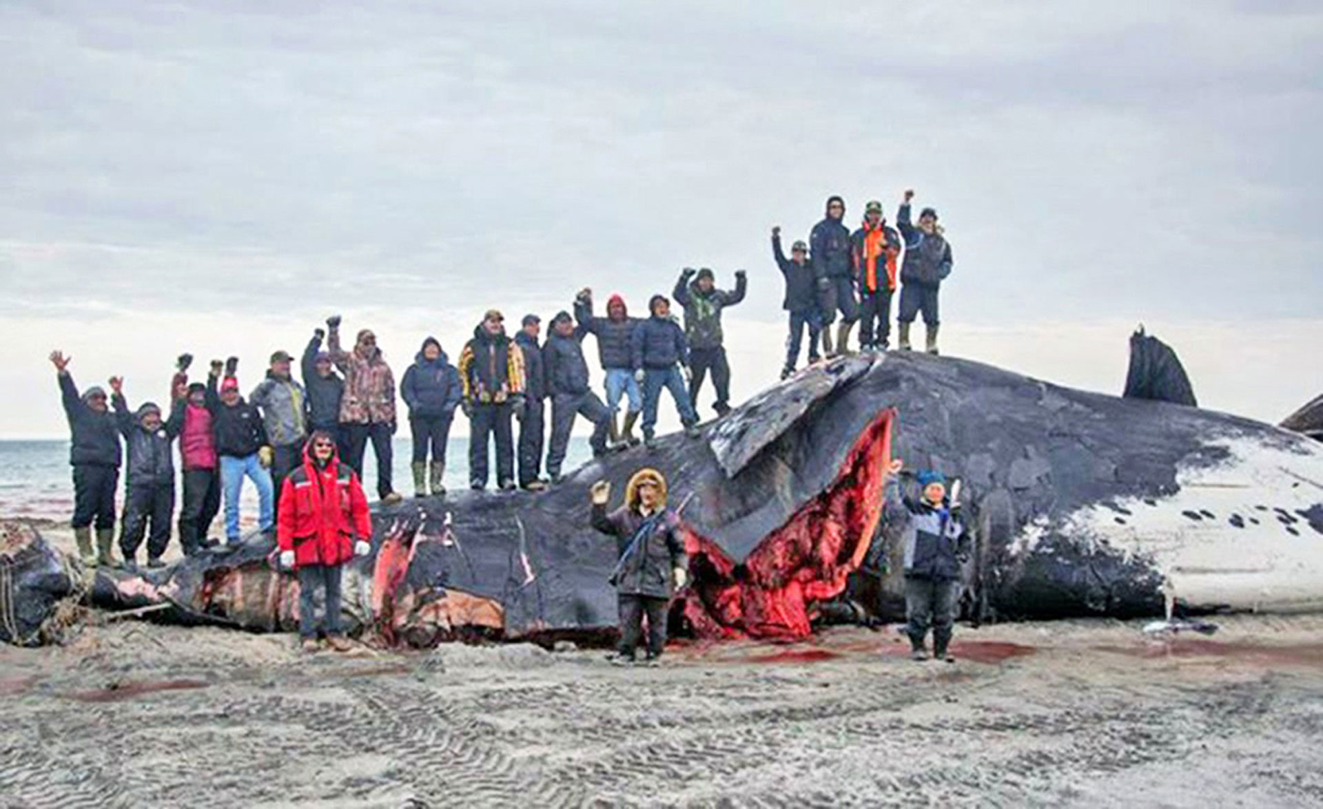 August 2014 - Clyde River, Nunavut (Canada) celebrates the harvest of a bowhead whale. The pregnant whale took almost two painful hours to die. Photo: Niore Iqalukjuak / Screenshot - http://bit.ly/1vhZApZ
