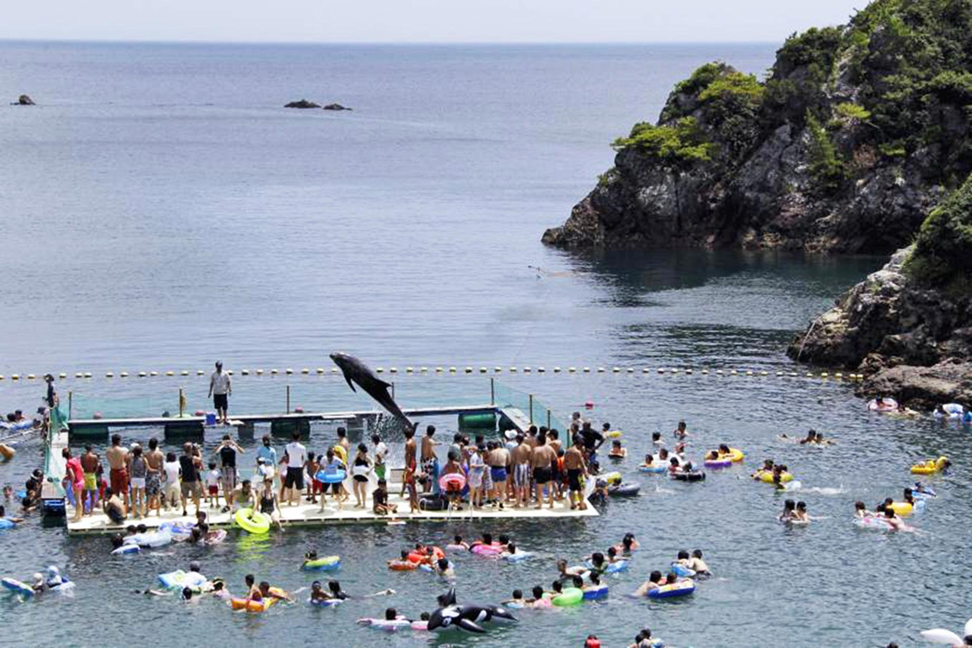 太地町の入江で生簀に入れられたイルカと泳ぐ光景客   AP