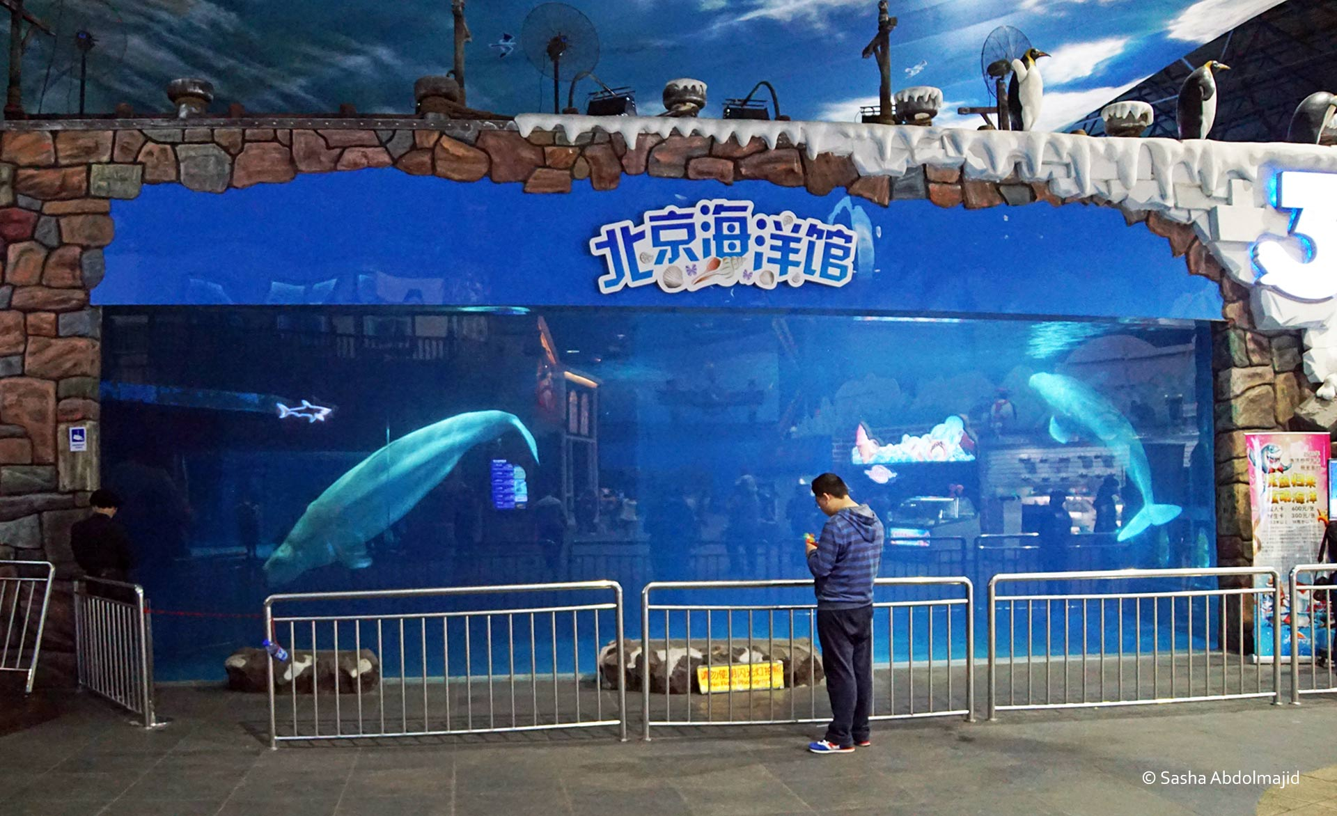 Beijing Aquarium - Two beluga whales imprisoned in a tiny concrete tank. Photo: Sasha Abdolmajid