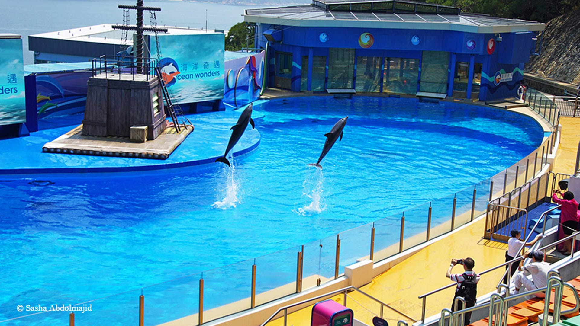 Captive dolphins performing tricks at Ocean Park Hong Kong. No tank can fulfil their natural travelling distance of up to 60 miles a day in the ocean. Photo: Sasha Abdolmajid