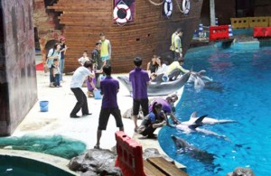 Visitors pay to have their photographs taken with dolphins at Hangzhou Polar Ocean Park. The dolphins must hold this pose for many minutes during these sessions. Photo: China Cetacean Alliance
