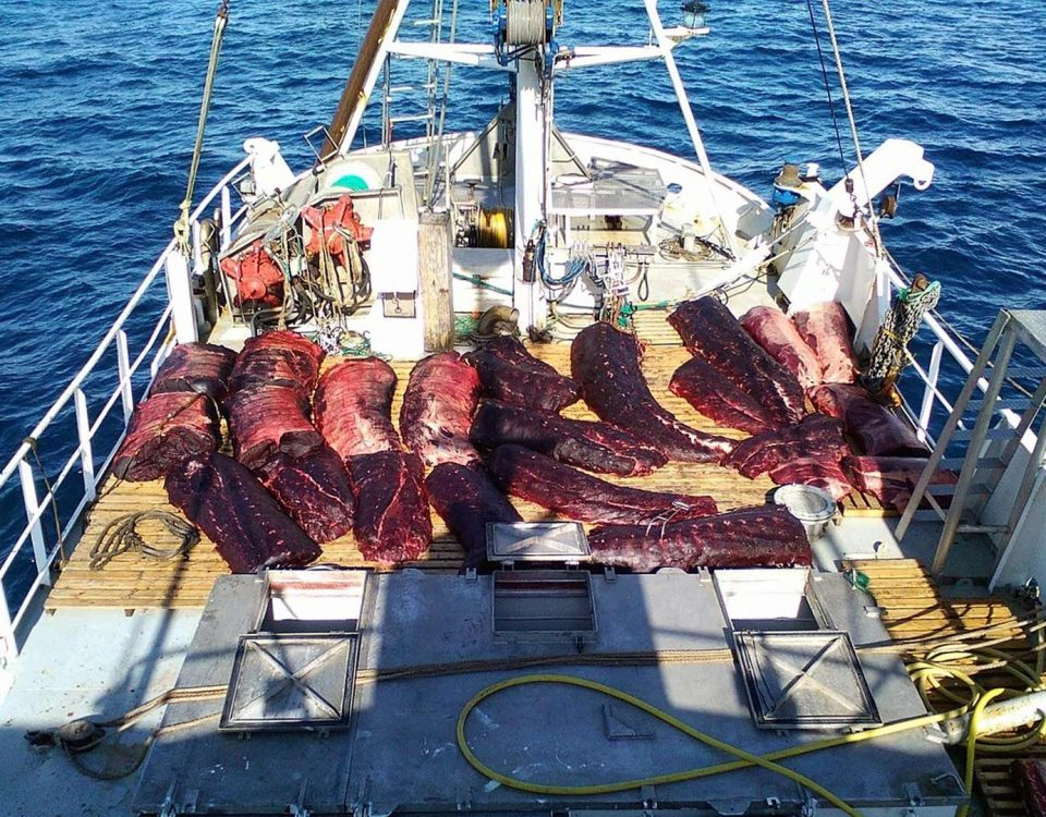 whaling vessel norway, chasse à la baleine, walfang norwegen